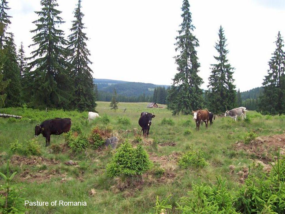 Landscape in Romania