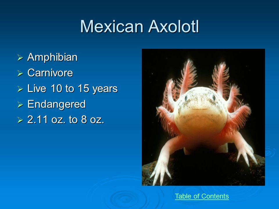 Mexican Axolotl Amphibian Amphibian Carnivore Carnivore Live 10 to 15 years Live 10 to 15 years Endangered Endangered 2.11 oz.