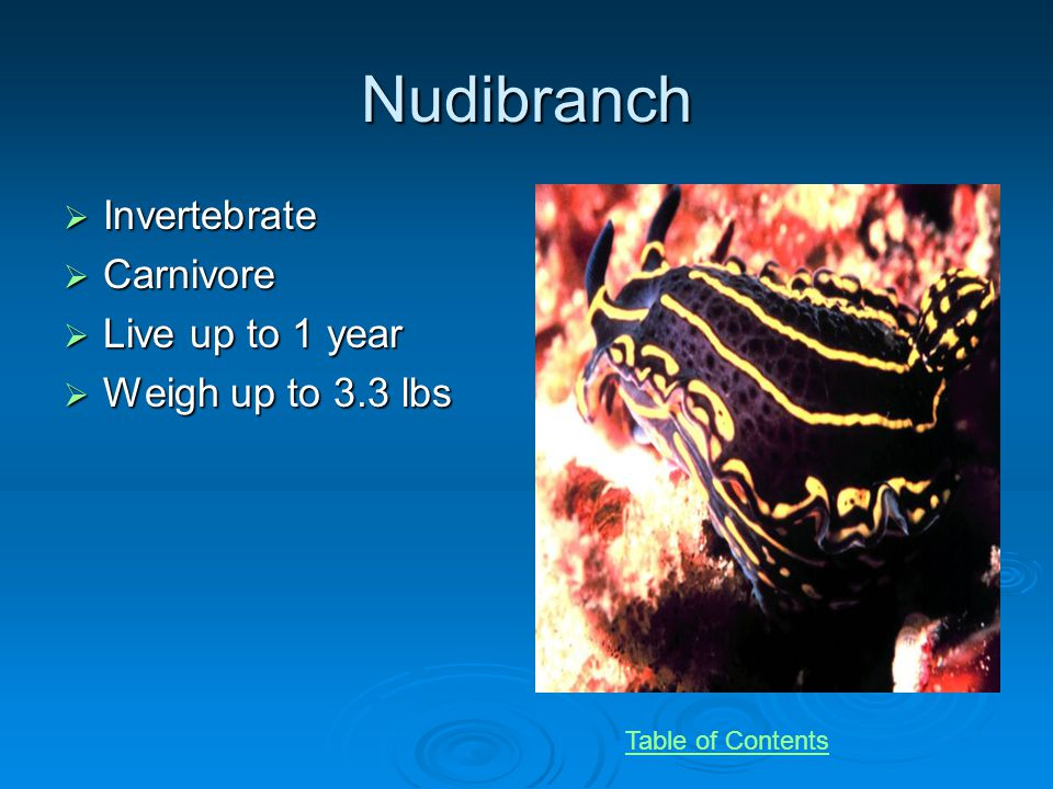 Nudibranch Invertebrate Invertebrate Carnivore Carnivore Live up to 1 year Live up to 1 year Weigh up to 3.3 lbs Weigh up to 3.3 lbs Table of Contents