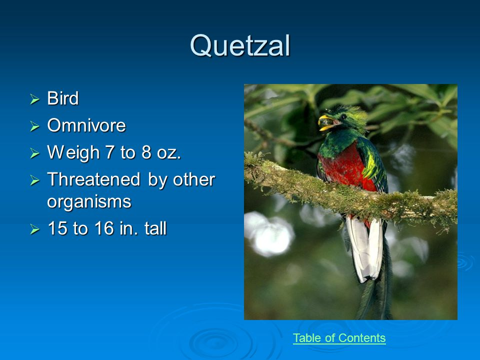Quetzal Bird Bird Omnivore Omnivore Weigh 7 to 8 oz.