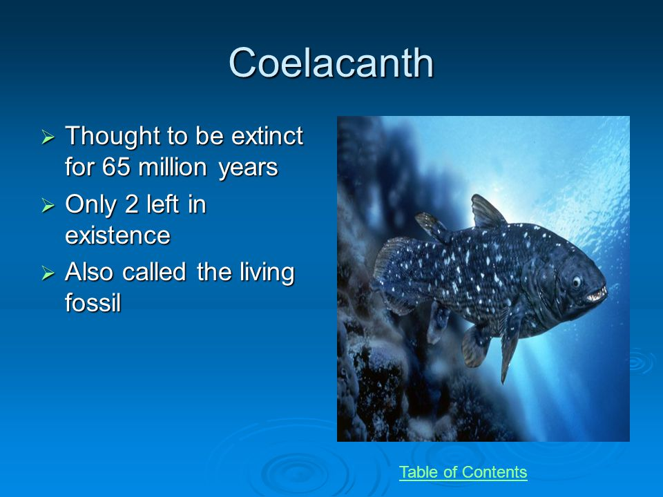 Coelacanth Thought to be extinct for 65 million years Thought to be extinct for 65 million years Only 2 left in existence Only 2 left in existence Also called the living fossil Also called the living fossil Table of Contents