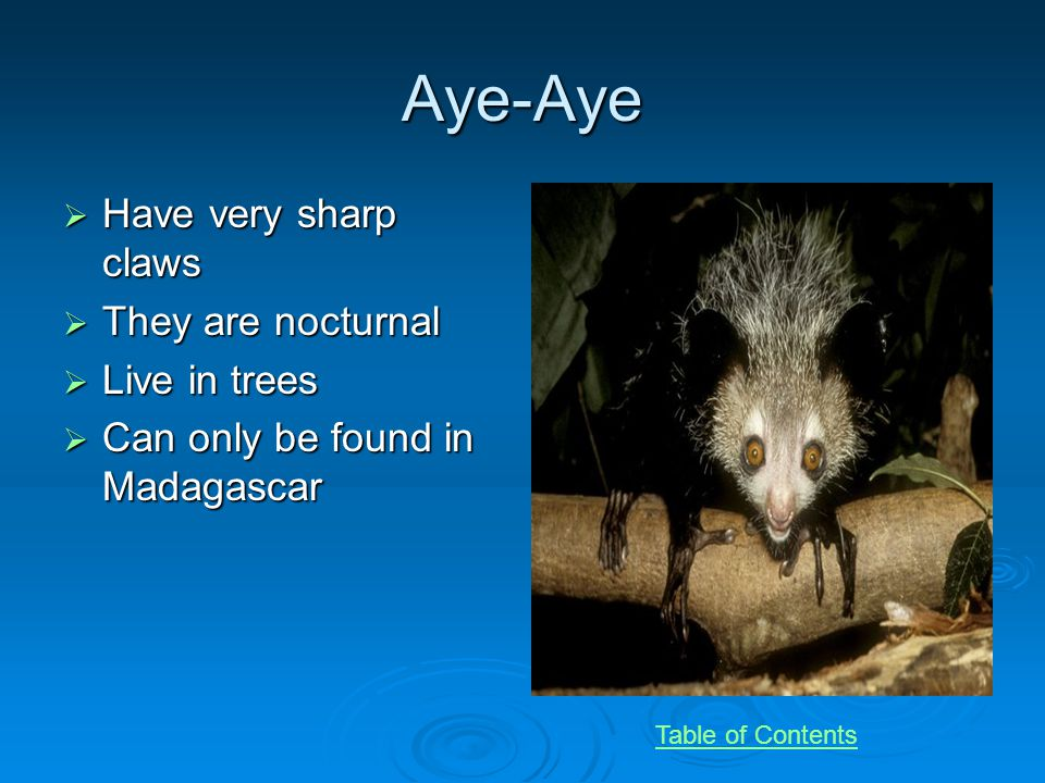 Aye-Aye Have very sharp claws Have very sharp claws They are nocturnal They are nocturnal Live in trees Live in trees Can only be found in Madagascar Can only be found in Madagascar Table of Contents
