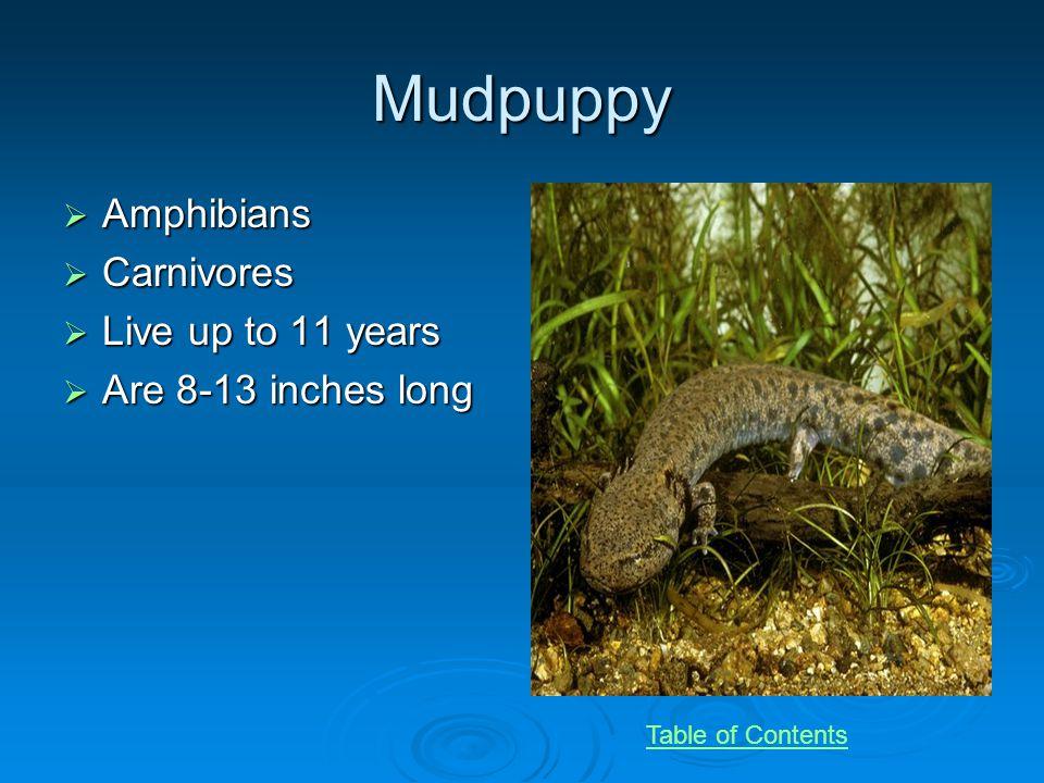 Tapir Mammal Mammal Herbivore Herbivore Live 25 to 30 years Live 25 to 30 years 25 to 42 inches tall 25 to 42 inches tall Endangered Endangered Table of Contents