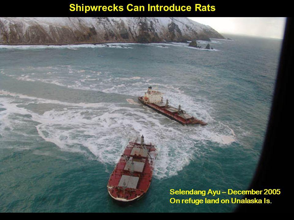 Shipwrecks Can Introduce Rats Selendang Ayu – December 2005 On refuge land on Unalaska Is.