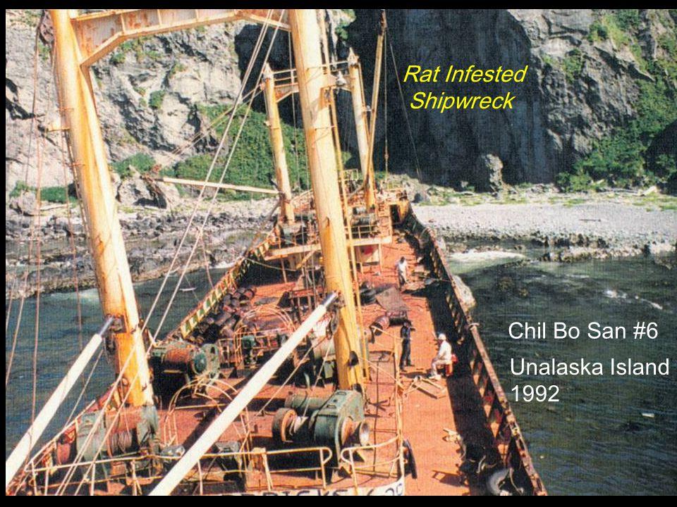 Chil Bo San #6 Unalaska Island 1992 Rat Infested Shipwreck