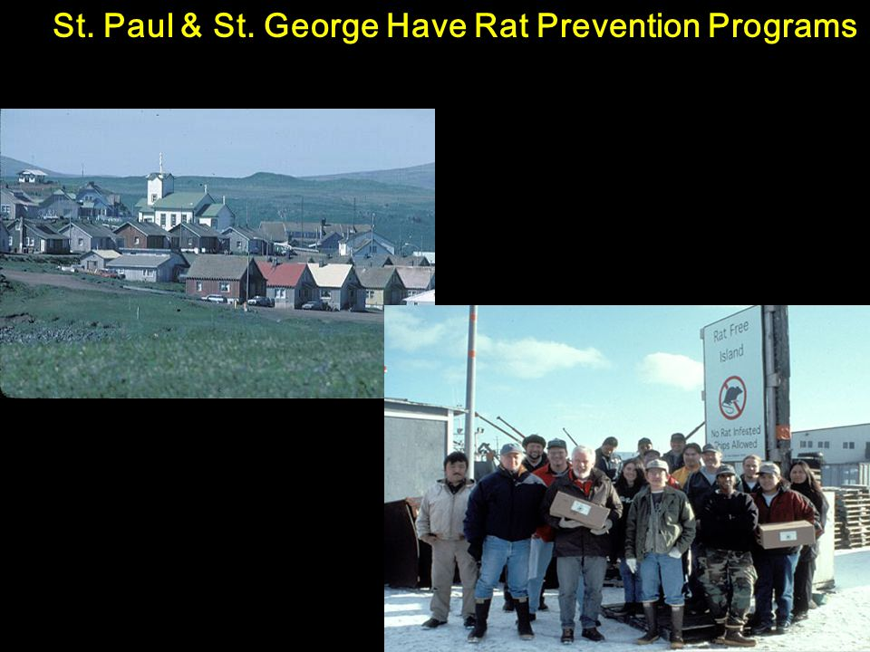 St. Paul & St. George Have Rat Prevention Programs