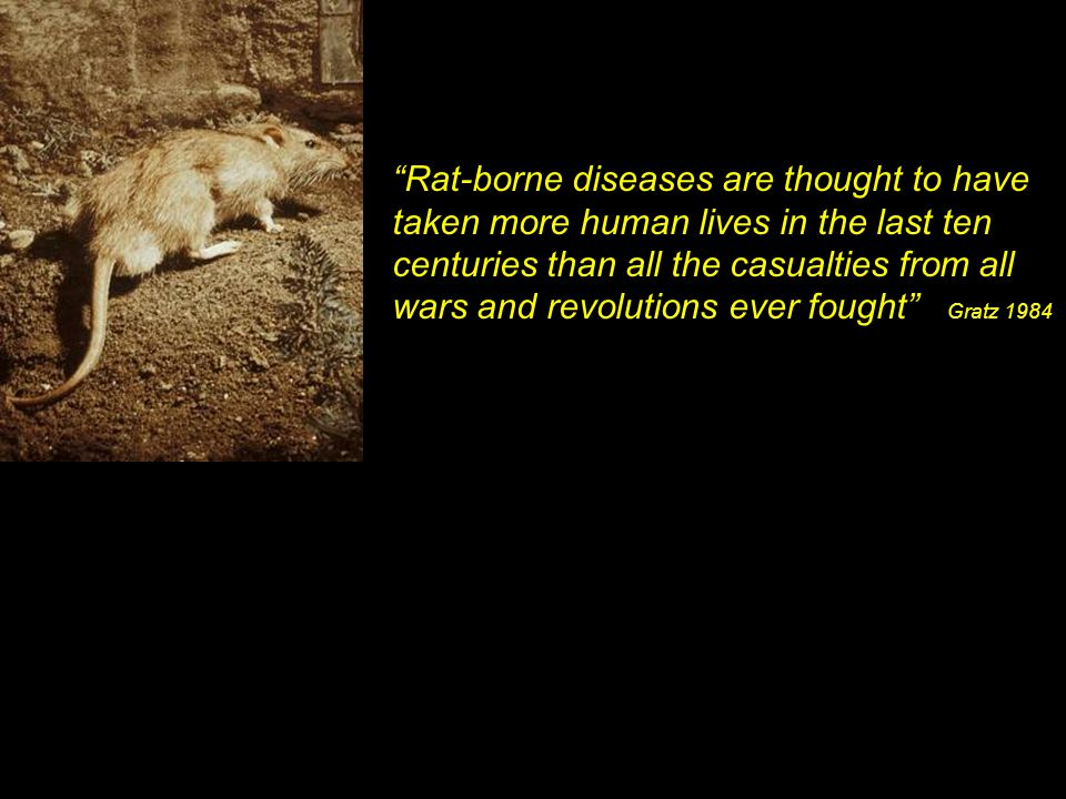 Rat-borne diseases are thought to have taken more human lives in the last ten centuries than all the casualties from all wars and revolutions ever fought Gratz 1984