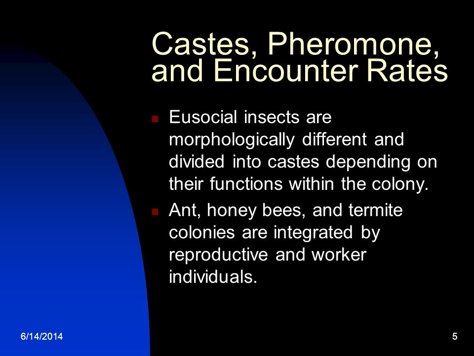 6/14/20145 Castes, Pheromone, and Encounter Rates Eusocial insects are morphologically different and divided into castes depending on their functions within the colony.