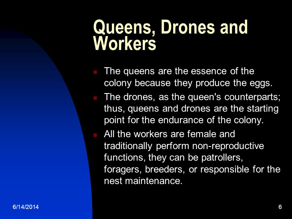 6/14/20146 Queens, Drones and Workers The queens are the essence of the colony because they produce the eggs.