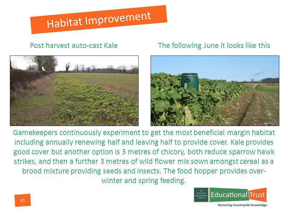 41 Post harvest auto-cast Kale Gamekeepers continuously experiment to get the most beneficial margin habitat including annually renewing half and leaving half to provide cover.
