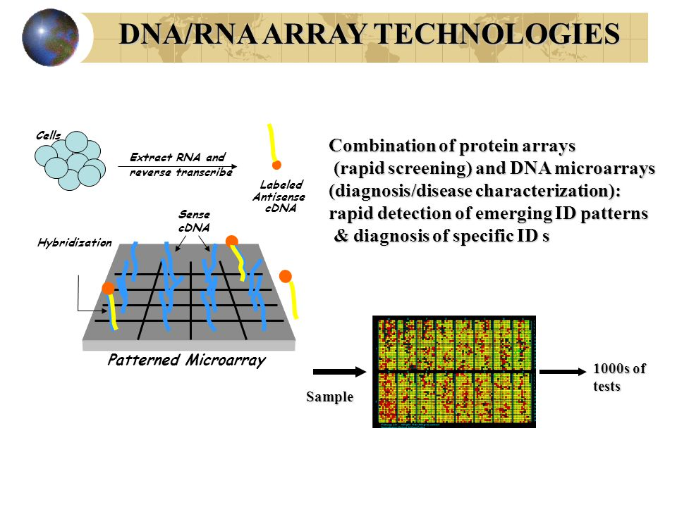 Sense cDNA Labeled Antisense cDNA Hybridization Patterned Microarray Cells Extract RNA and reverse transcribe 1000s of tests DNA/RNA ARRAY TECHNOLOGIES Sample Combination of protein arrays (rapid screening) and DNA microarrays (rapid screening) and DNA microarrays (diagnosis/disease characterization): rapid detection of emerging ID patterns & diagnosis of specific ID s & diagnosis of specific ID s