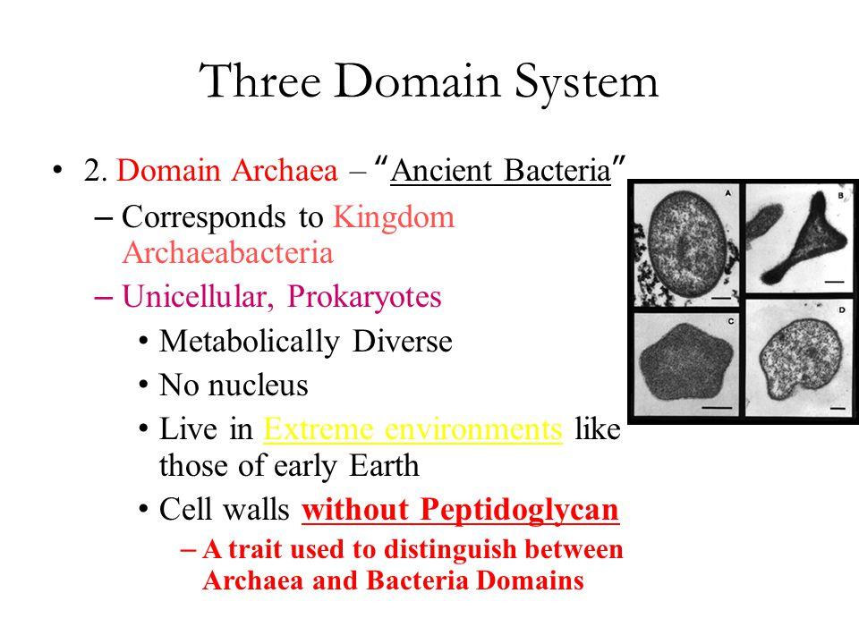 Three Domain System 2. Domain Archaea – Ancient Bacteria – Corresponds to Kingdom Archaeabacteria – Unicellular, Prokaryotes Metabolically Diverse No