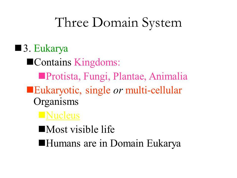 Three Domain System 3. Eukarya Contains Kingdoms: Protista, Fungi, Plantae, Animalia Eukaryotic, single or multi-cellular Organisms Nucleus Most visib