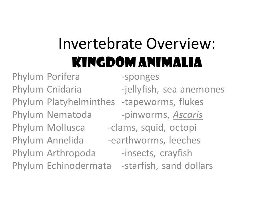 Invertebrate Overview: Kingdom Animalia Phylum Porifera -sponges Phylum Cnidaria -jellyfish, sea anemones Phylum Platyhelminthes -tapeworms, flukes Ph