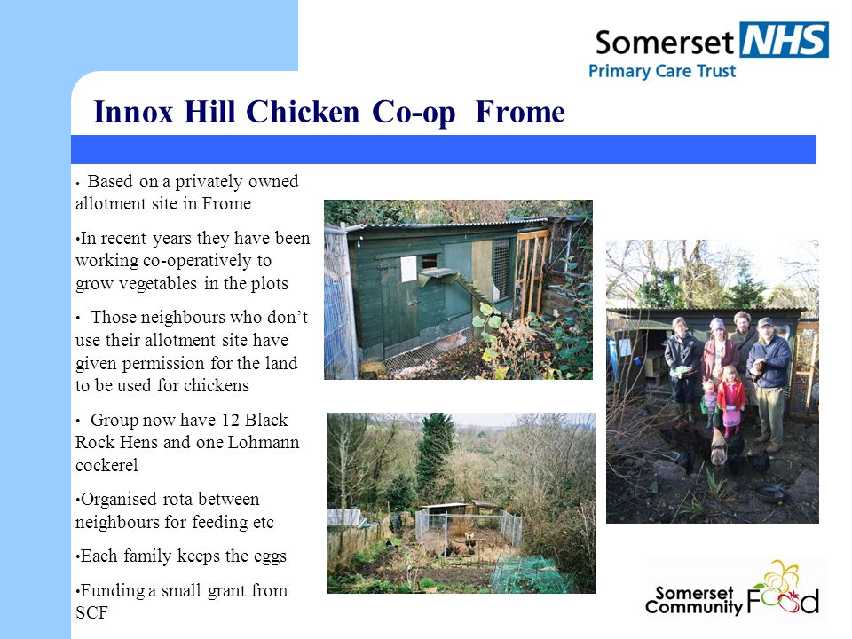 Innox Hill Chicken Co-op Frome Based on a privately owned allotment site in Frome In recent years they have been working co-operatively to grow vegetables in the plots Those neighbours who dont use their allotment site have given permission for the land to be used for chickens Group now have 12 Black Rock Hens and one Lohmann cockerel Organised rota between neighbours for feeding etc Each family keeps the eggs Funding a small grant from SCF