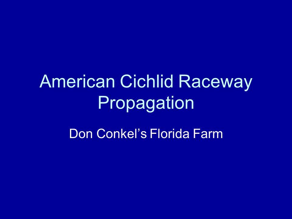 American Cichlid Raceway Propagation Don Conkels Florida Farm