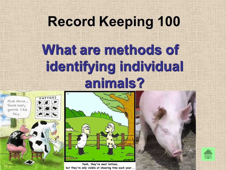 Record Keeping 100 What are methods of identifying individual animals?