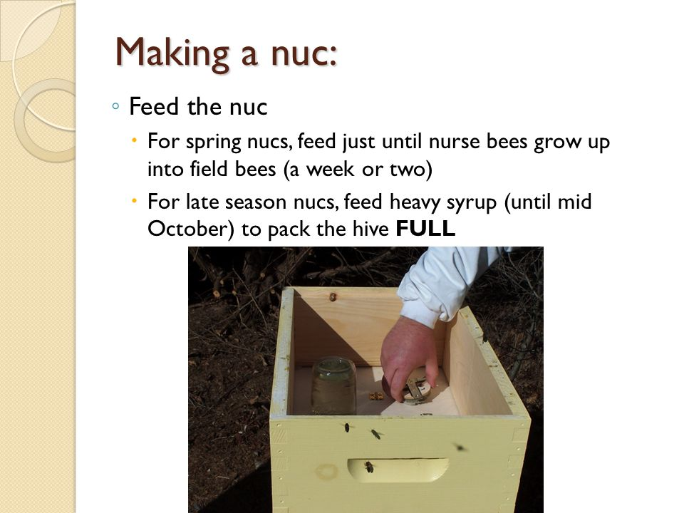 Making a nuc: Feed the nuc For spring nucs, feed just until nurse bees grow up into field bees (a week or two) For late season nucs, feed heavy syrup