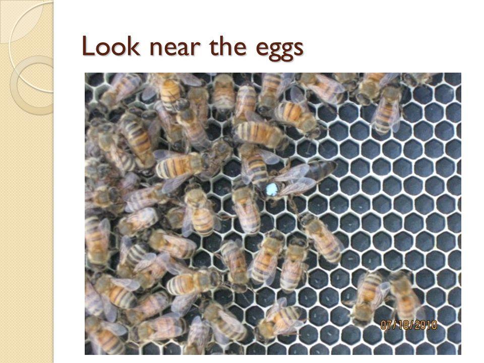 Look near the eggs