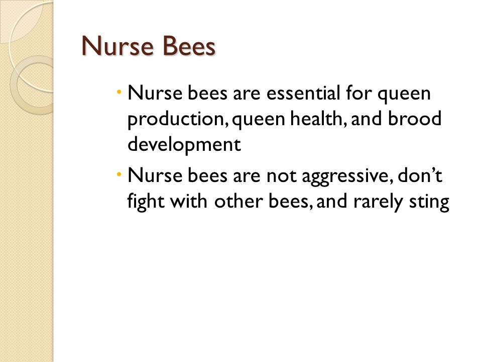Nurse Bees Nurse bees are essential for queen production, queen health, and brood development Nurse bees are not aggressive, dont fight with other bee