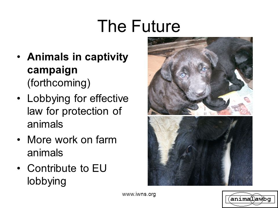 The Future Animals in captivity campaign (forthcoming) Lobbying for effective law for protection of animals More work on farm animals Contribute to EU lobbying