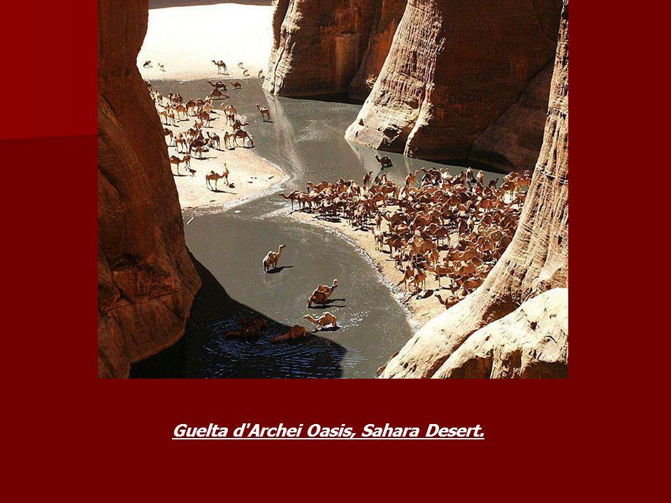 Guelta d Archei Oasis, Sahara Desert.