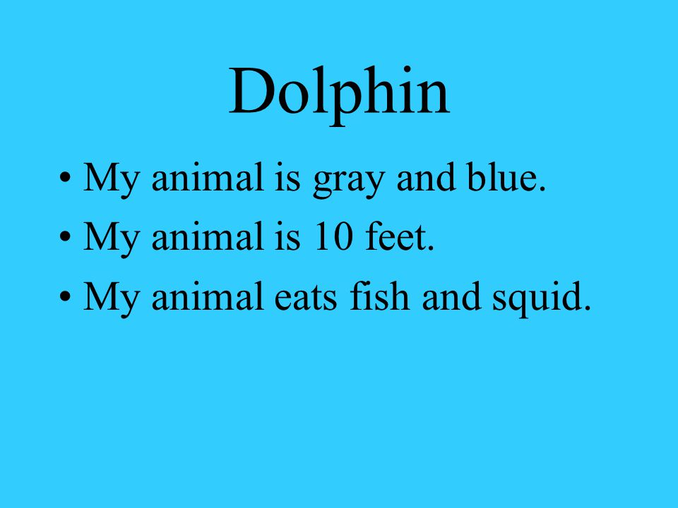 Dolphin My animal is gray and blue. My animal is 10 feet. My animal eats fish and squid.