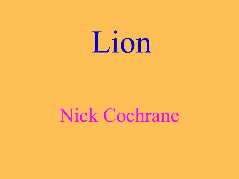 Lion Nick Cochrane