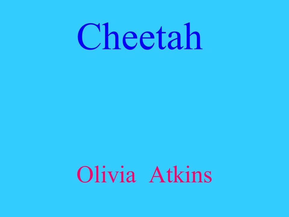 Cheetah Olivia Atkins