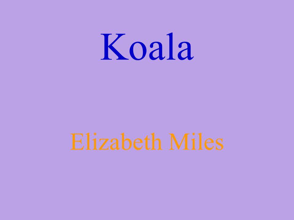 Koala Elizabeth Miles