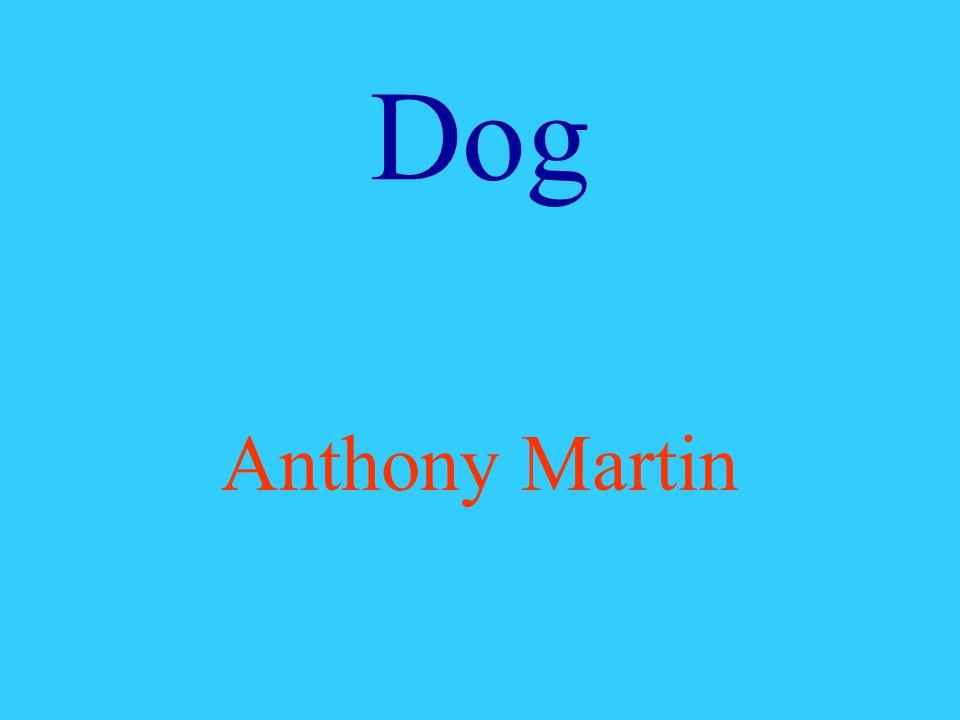 Dog Anthony Martin
