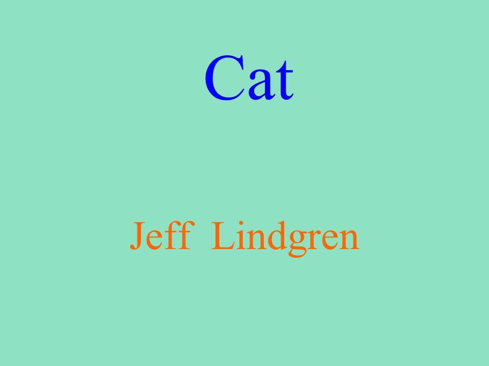 Cat Jeff Lindgren
