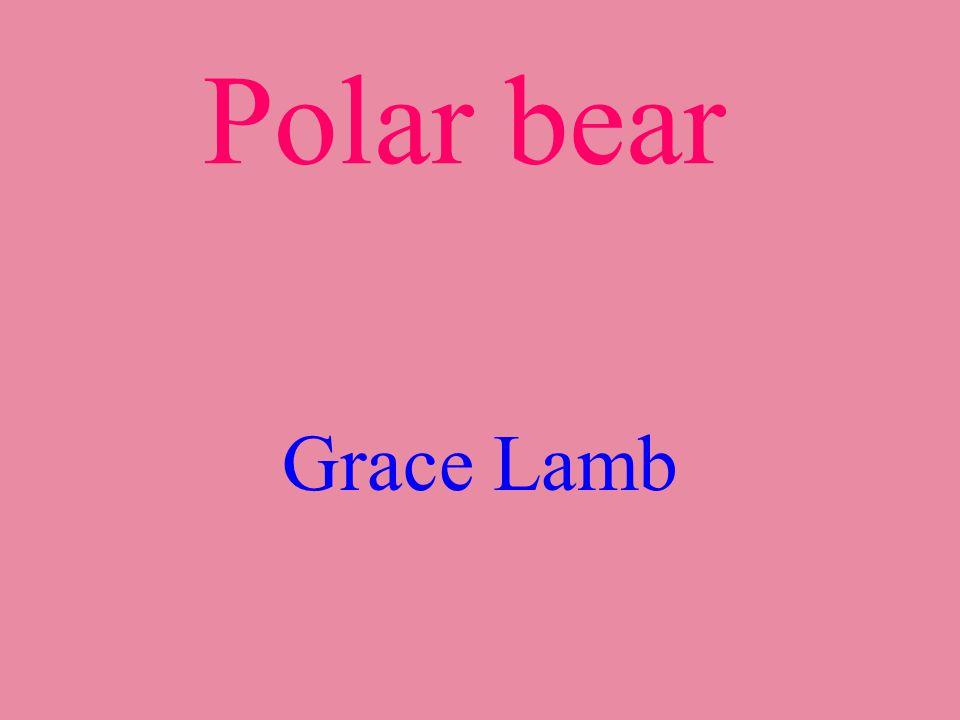 Polar bear Grace Lamb
