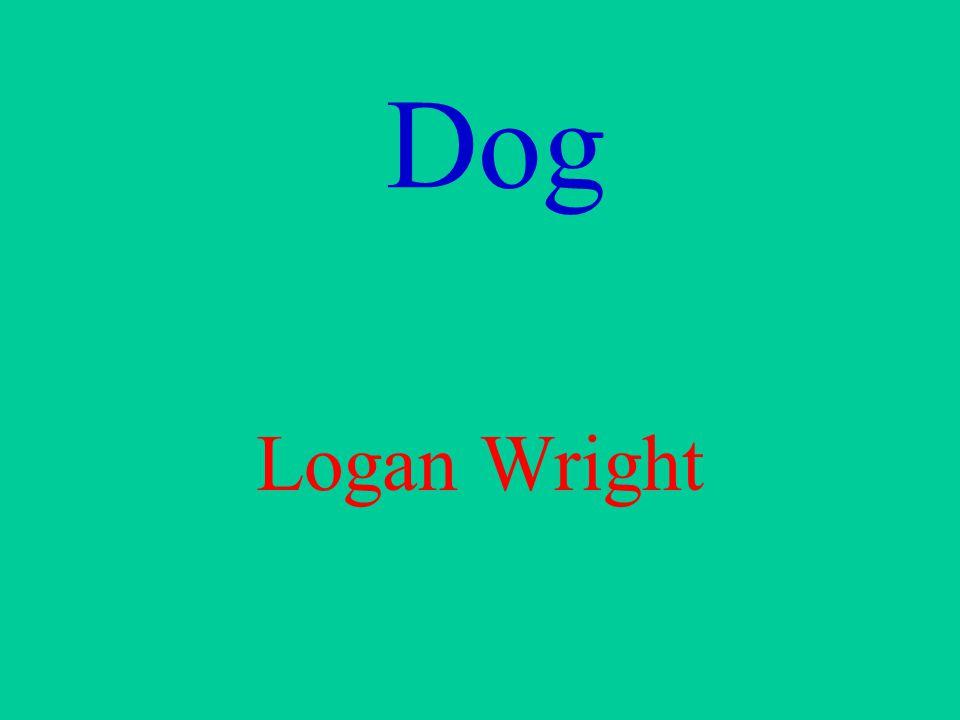 Dog Logan Wright