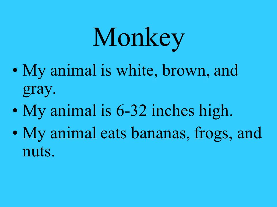 Monkey My animal is white, brown, and gray. My animal is 6-32 inches high.