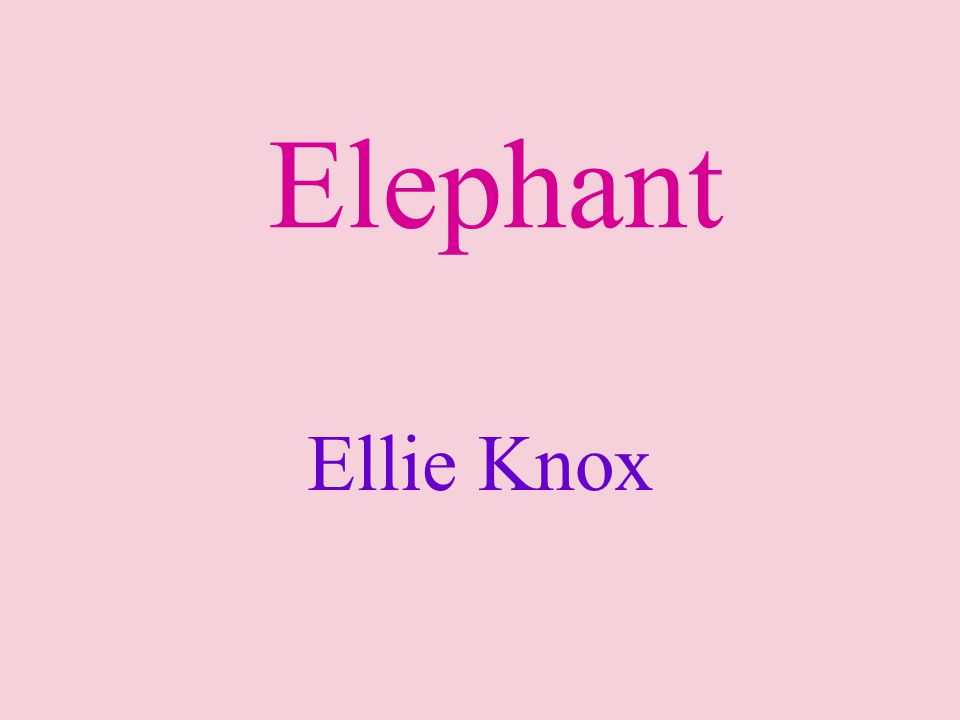 Ellie Knox Elephant