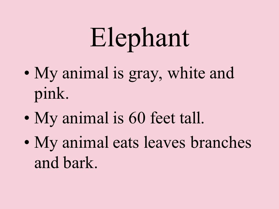 My animal is gray, white and pink. My animal is 60 feet tall.