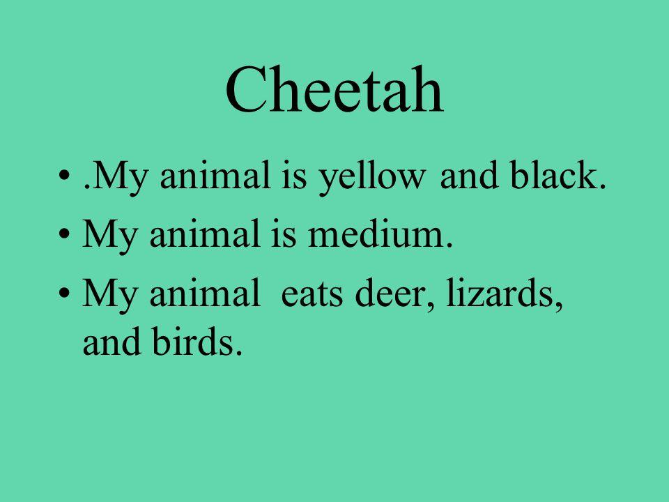 Cheetah.My animal is yellow and black. My animal is medium.