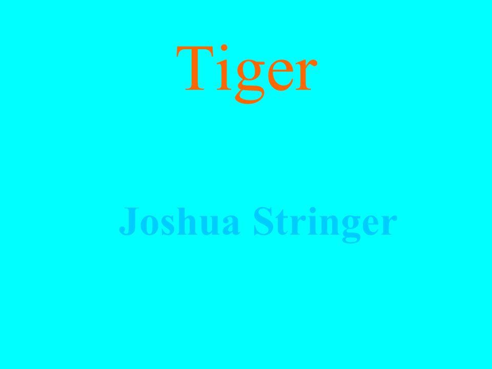 Tiger Joshua Stringer