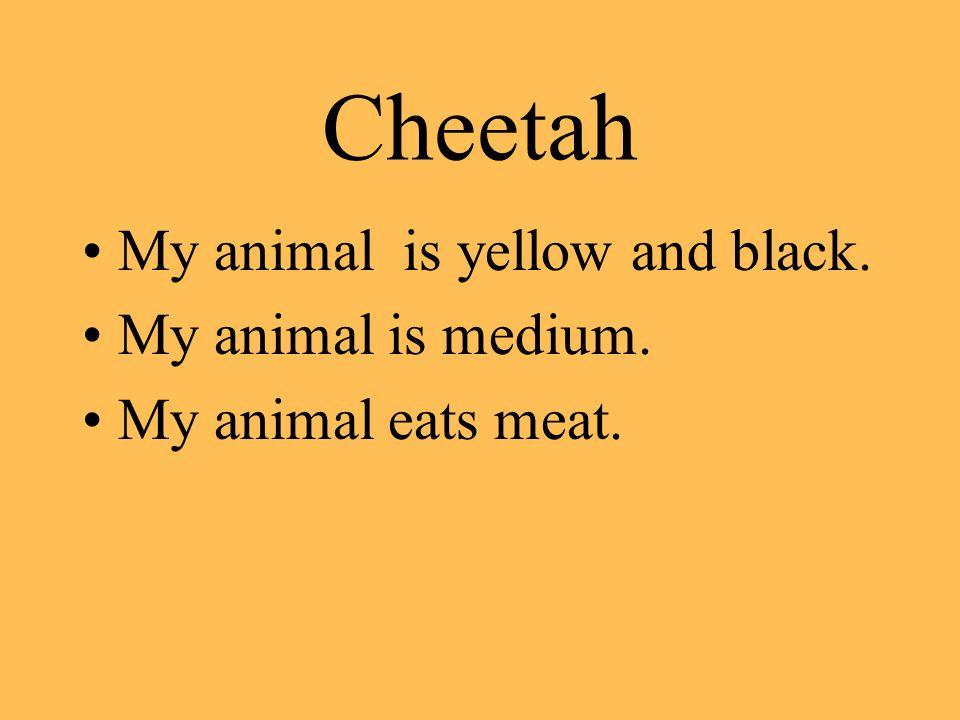 Cheetah My animal is yellow and black. My animal is medium. My animal eats meat.