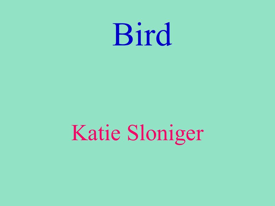 Bird Katie Sloniger