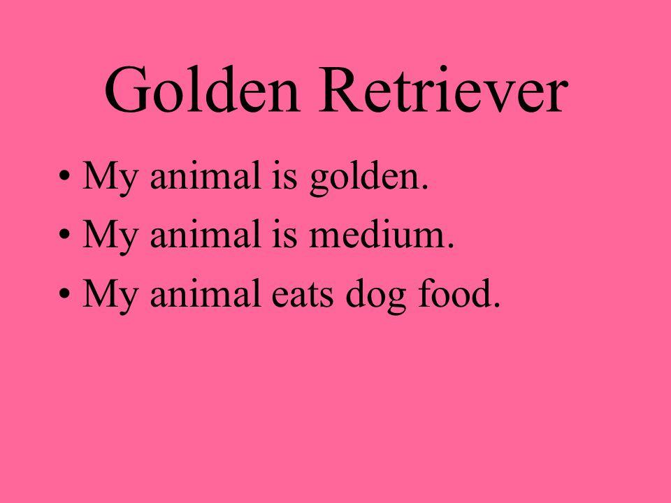 Golden Retriever My animal is golden. My animal is medium. My animal eats dog food.