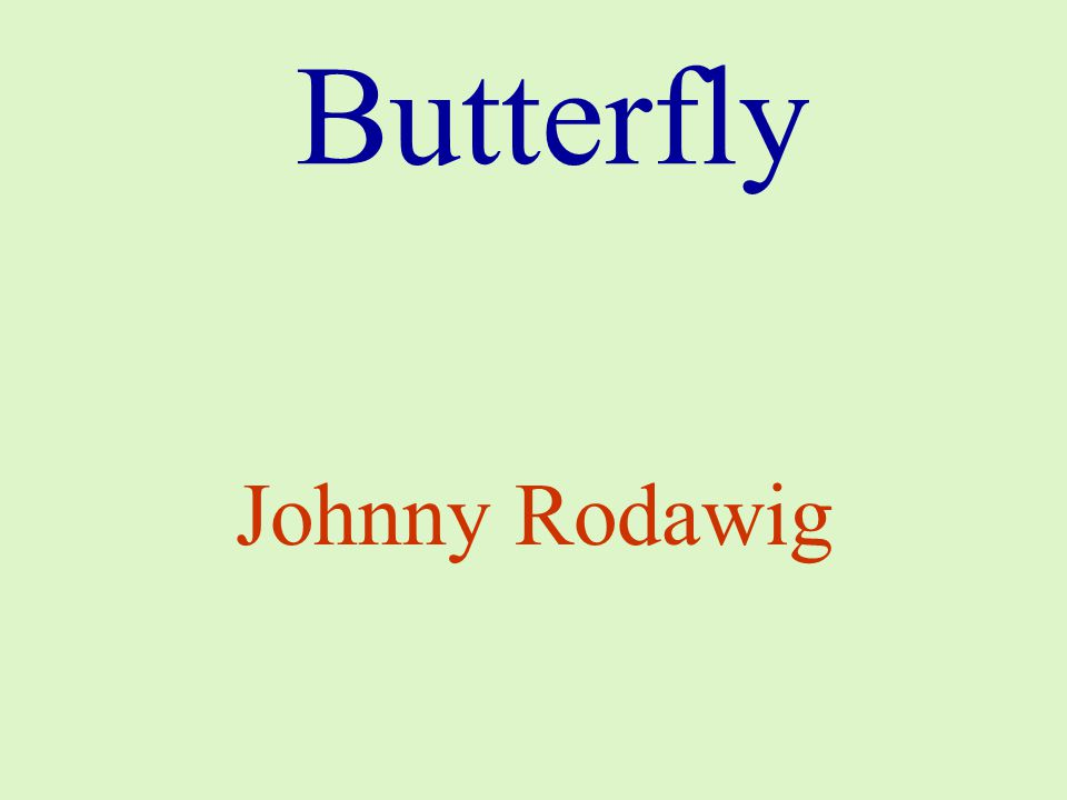 Butterfly Johnny Rodawig