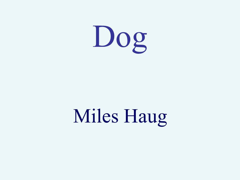 Dog Miles Haug