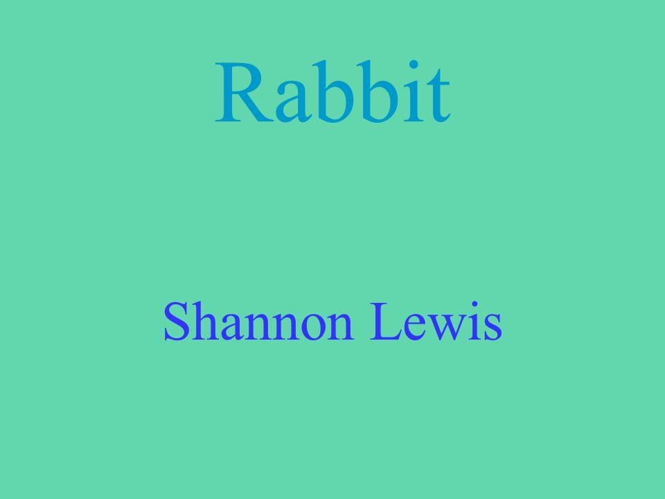 Rabbit Shannon Lewis