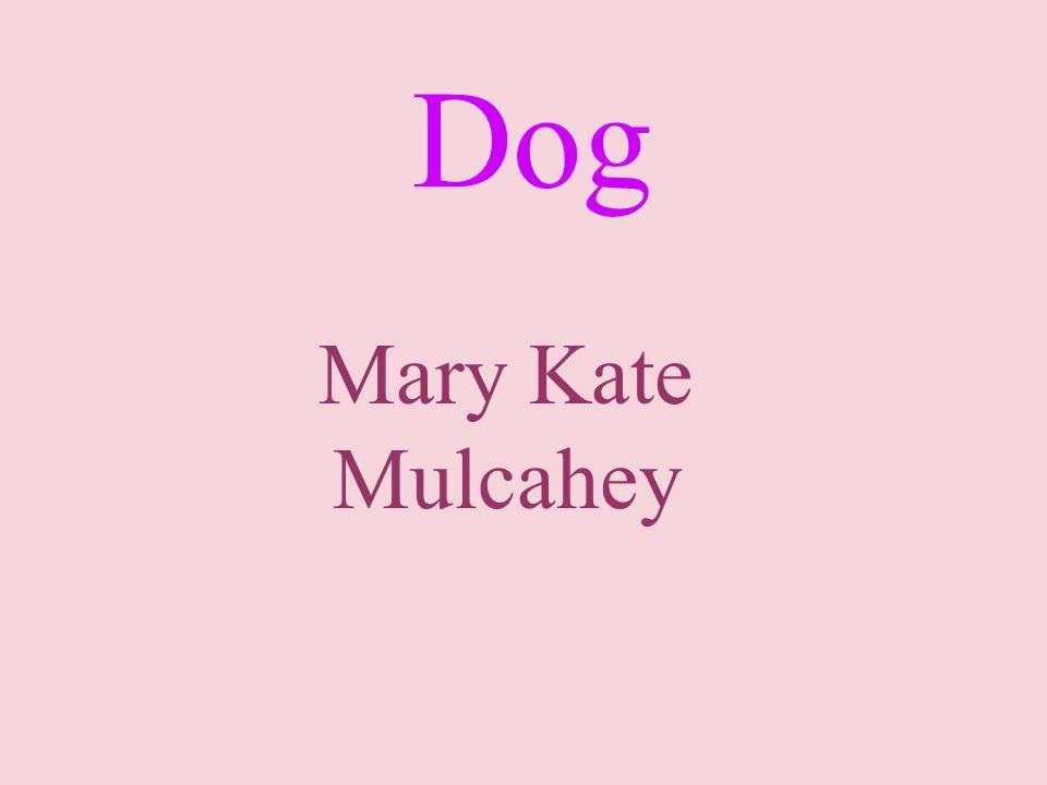 Dog Mary Kate Mulcahey