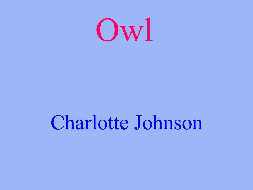 Owl Charlotte Johnson