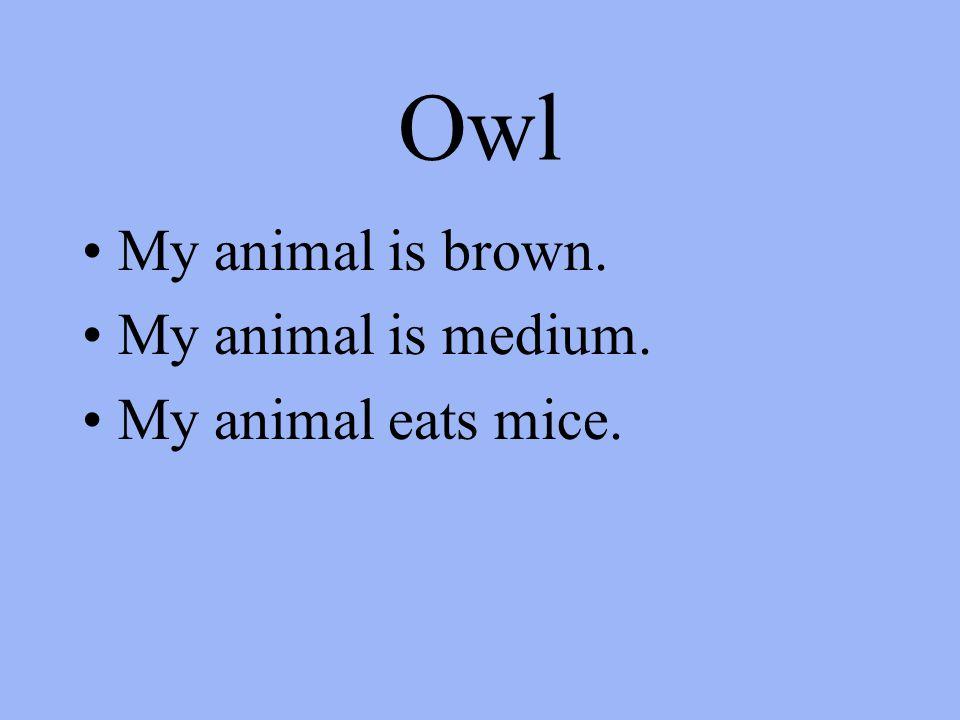 Owl My animal is brown. My animal is medium. My animal eats mice.