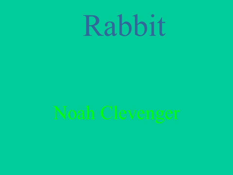 Rabbit Noah Clevenger