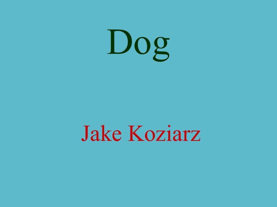 Dog Jake Koziarz